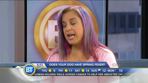 Does your dog have spring fever?