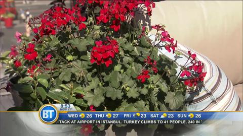 Canada Day garden prep with Frankie Flowers